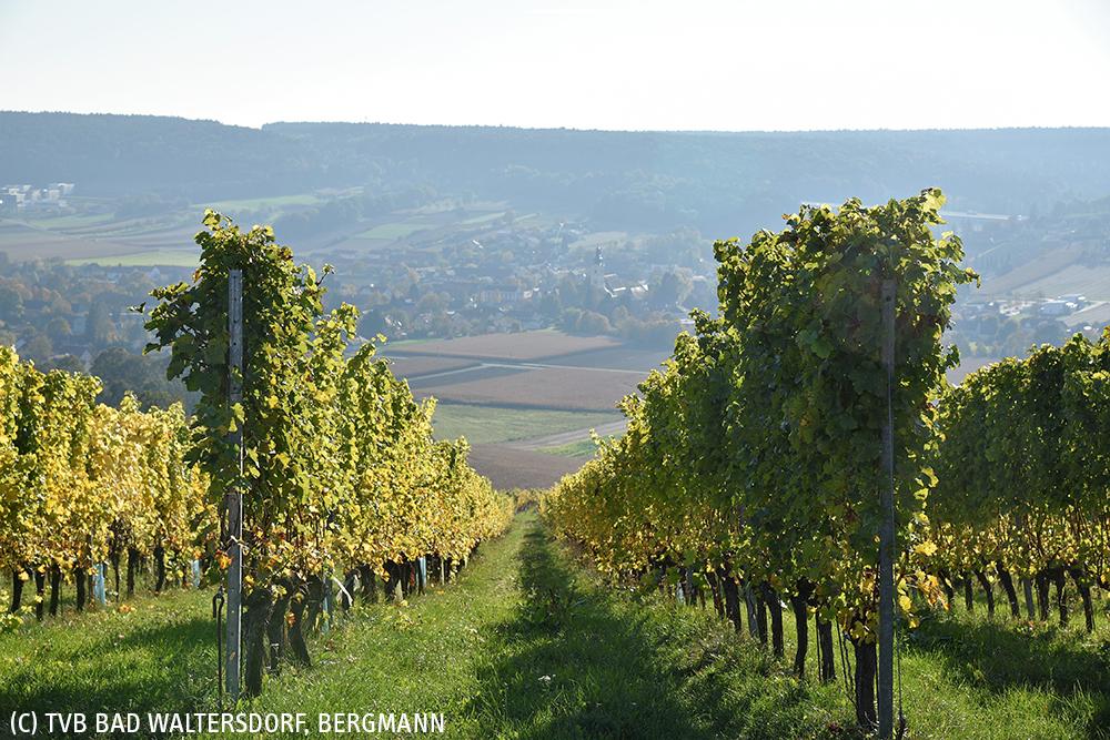 Weingarten Bad Waltersdorf